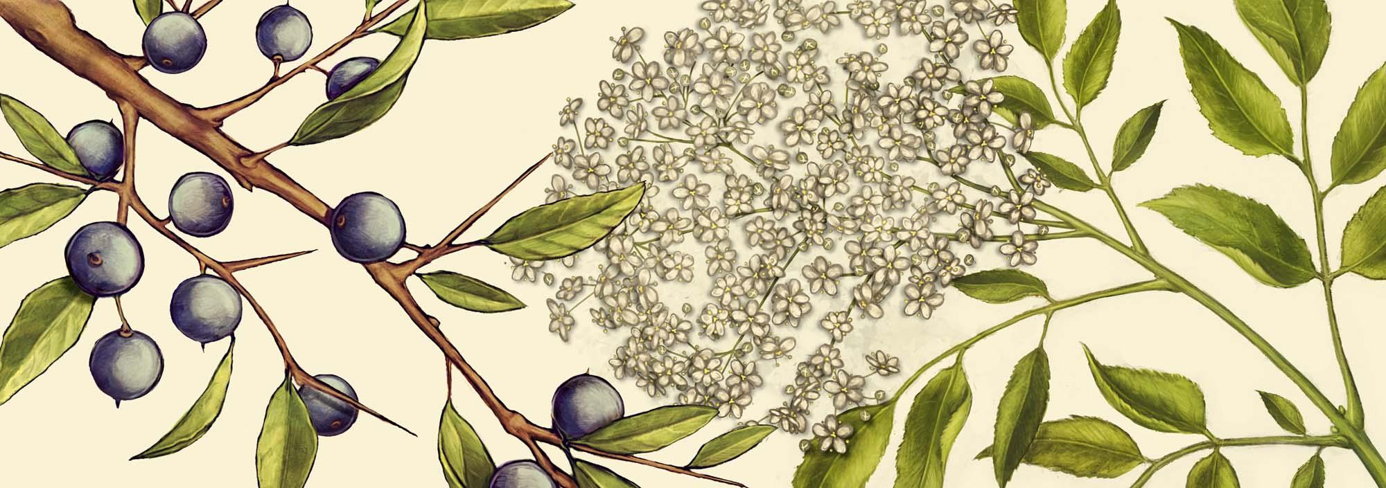 03_BOS_botanicals_montage_HR